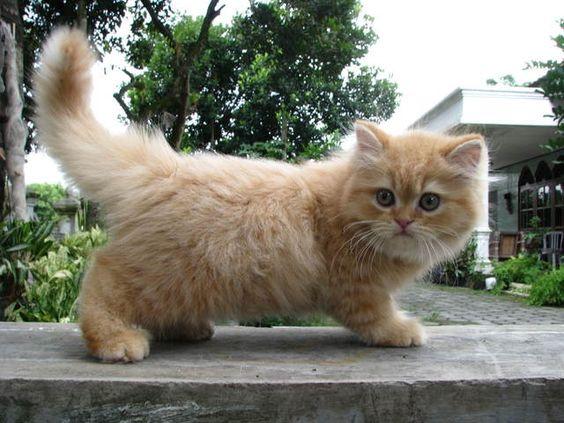 Cara Merawat Kucing Drexfiles Cute Cats Photos Kittens Cutest Cute Baby Animals