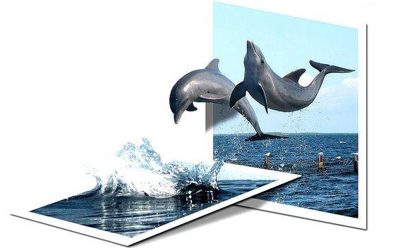 Dwa, Delfiny, Skok, Woda, 4D