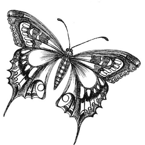 Butterfly Drawings Black and White | butterfly drawing ...