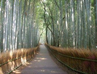 La forêt de bambou d'Arashiyama (Kyōto) | http://bit.ly/1td7gXI |#AsieInsolite, #JaponInsolite, #ParcNaturel
