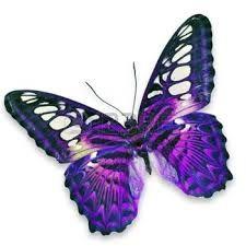 Resultado de imagen para imagenes de mariposas reales azules