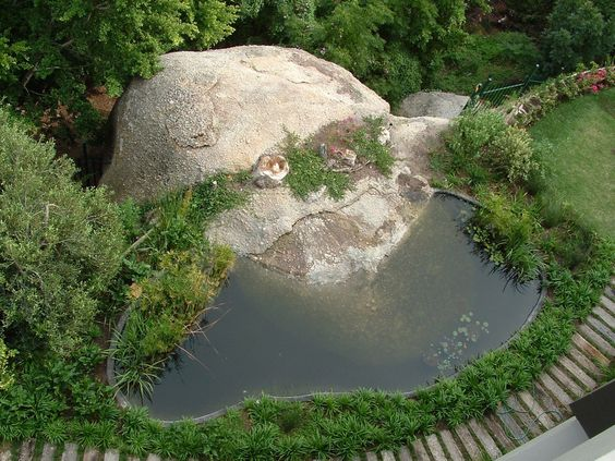One of our best koi pond environments with wetland for Koi pond rocks