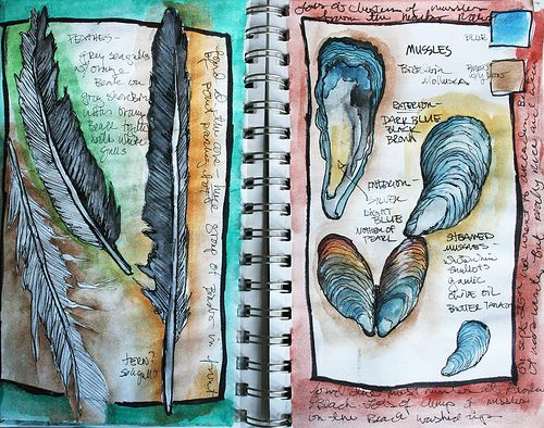 Feathers and shells from the beach. Thanks alisa burke - artist sketchbook