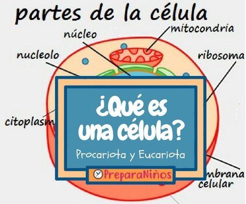 Qué Es Una Célula Resumen Para Niños Organelos Celulares Y Sus Funciones Para Niños Mitocondria Ri Clases De Celulas Teoría Celular Procariota Y Eucariota