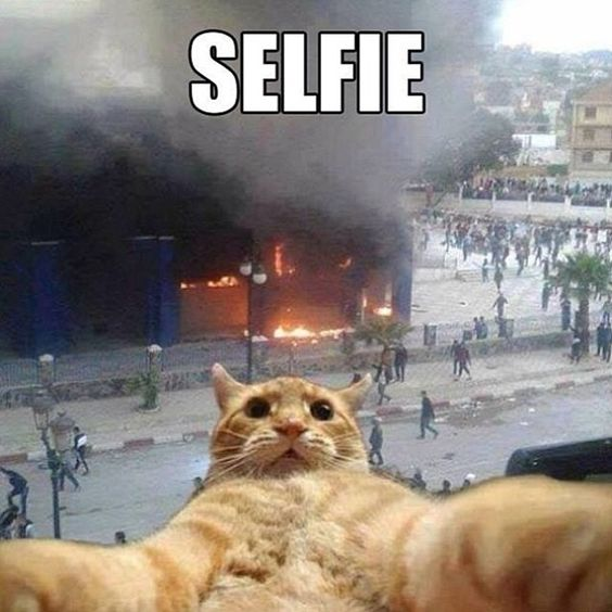 Selfie Funny Quotes Quote Cat Lol Funny Quotes Humor