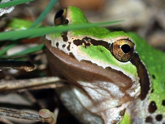 I love when I find random frogs in my backyard! Kate Hubbard Photography