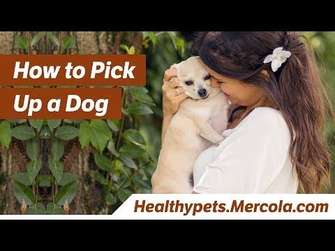 Pin On For Your Dogs Health