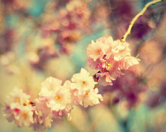 Linger Pink Blossom Blossom Color Inspiration
