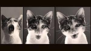 Resultado de imagem para animals tumblr