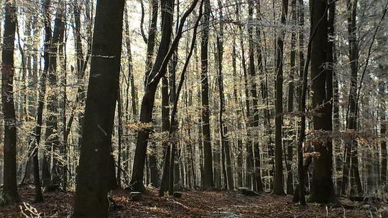 ivlys posted a photo:  Der Wald bei Frankenhausen - Odenwald  Forest near Frankenhausen - Odenwald