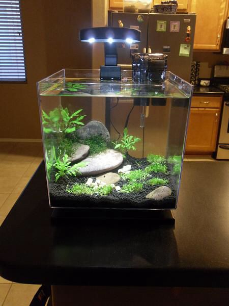Nano love the rock placement and black sand pet life for Sand for fish tank