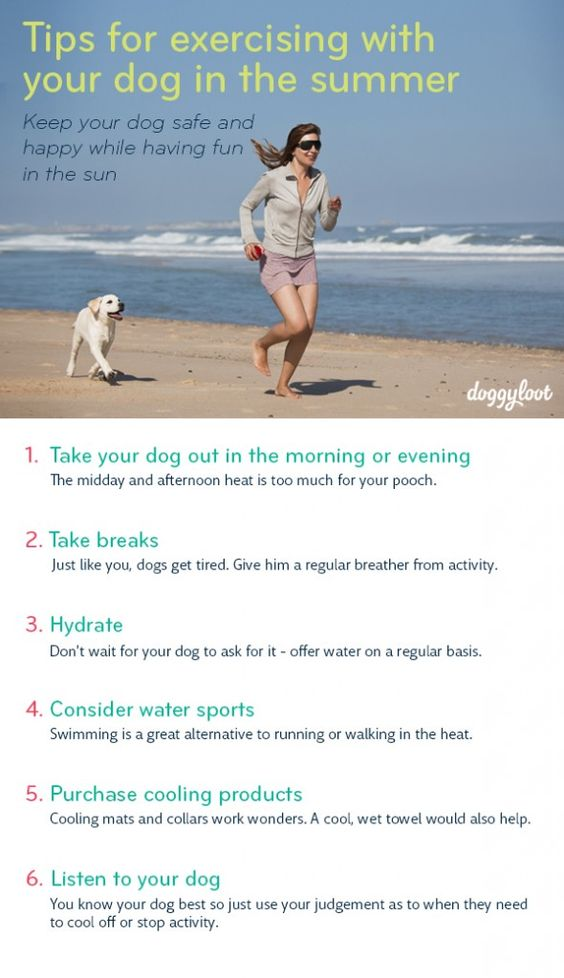 5 tips to keep your dog safe, cool and hydrated while ...