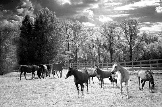 Black and White Landscape Photography    http://images.fineartamerica.com/images-medium-large/1-surreal-horses-black-white-landscape-kathy-fornal.jpg