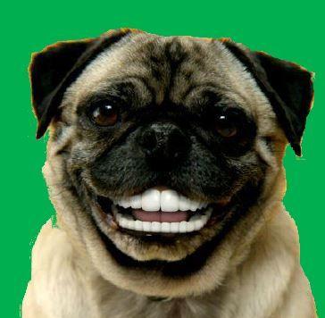 Amelia's side of the room: Dog with human teeth on green ...