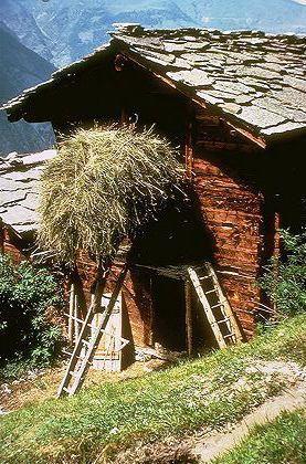 ღღ A mountain peasant brings in a load of hey  | Grächen, Valais, Switzerland