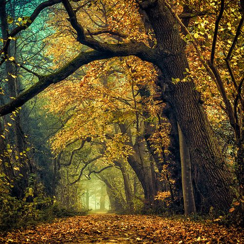 Deeper shades of Autumn by =Oer-Wout on deviantART: Favorite Places Spaces, Nature, Autumn Fall, Beautiful Places, Deeper Shades, The Netherlands, Photo