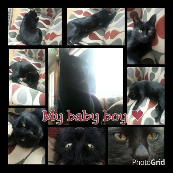 My devoted human cat