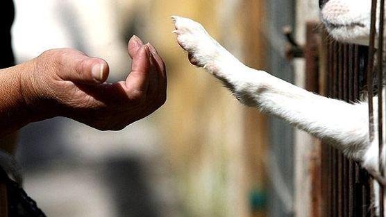 AL GOBIERNO: PROHIBIR LA VENTA DE GATOS Y PERROS  GOVERNMENT: BAN THE SALE OF CATS AND DOGS