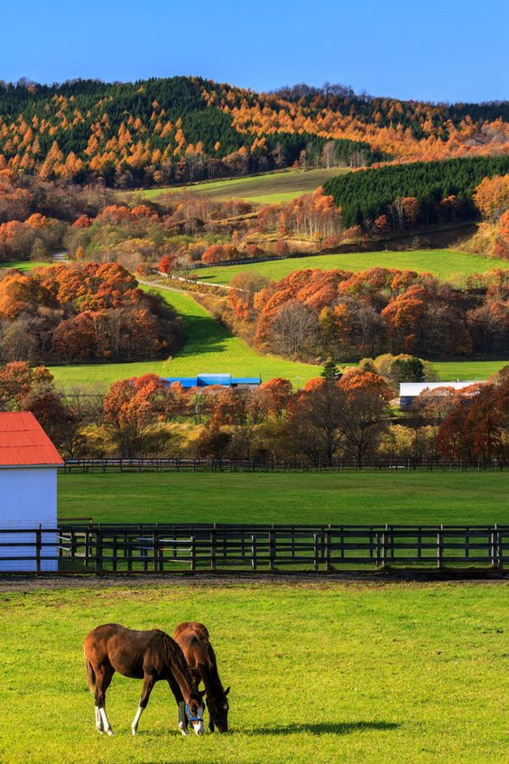 Autumn hokkaido and horses on pinterest for Ranch and rural living