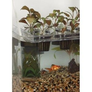 Hydroponics and fish a marriage made for gardening 2012 for Hydroponics and fish