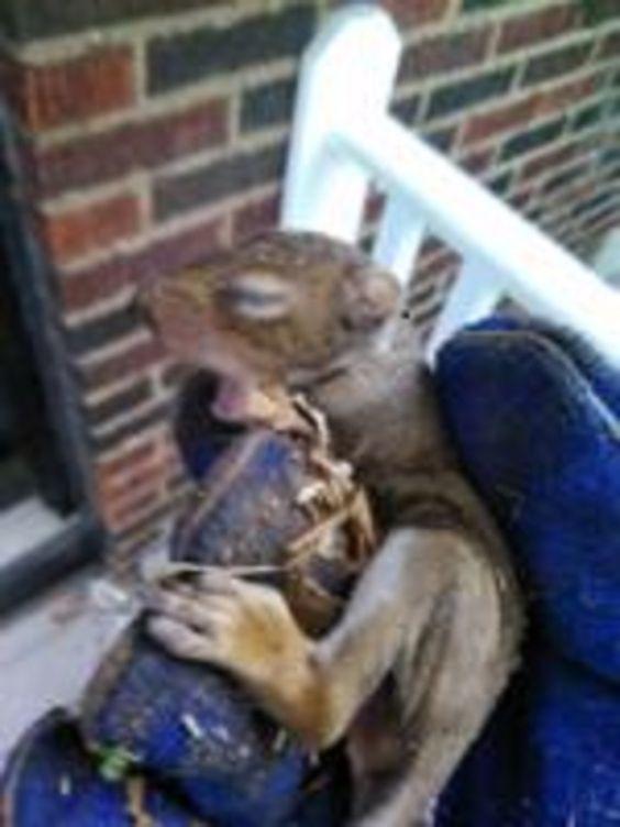 Are Squirrels Active At Night Squirrel Season Squirrel Wildlife