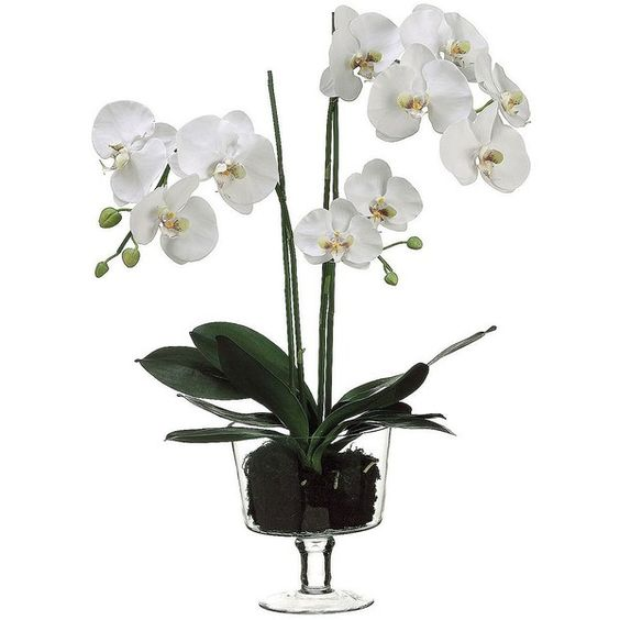29-in. Artificial Phalaenopsis Plant, White ($144) ❤ liked on Polyvore featuring home, home decor, floral decor, white, white home decor, contemporary home decor and white home accessories