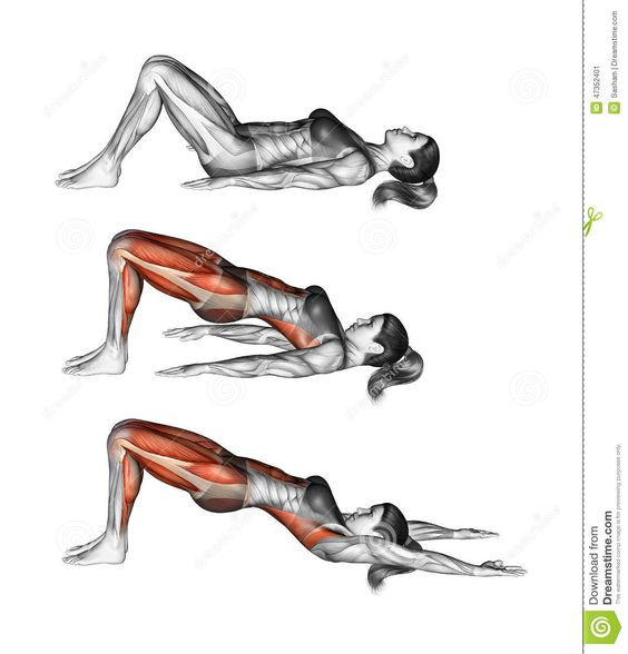 Yoga Exercise. Bridge Pose. Setu Bandhasana. Female - Download From Over 45 Million High Quality Stock Photos, Images, Vectors. Sign up for FREE today. Image: 47352401