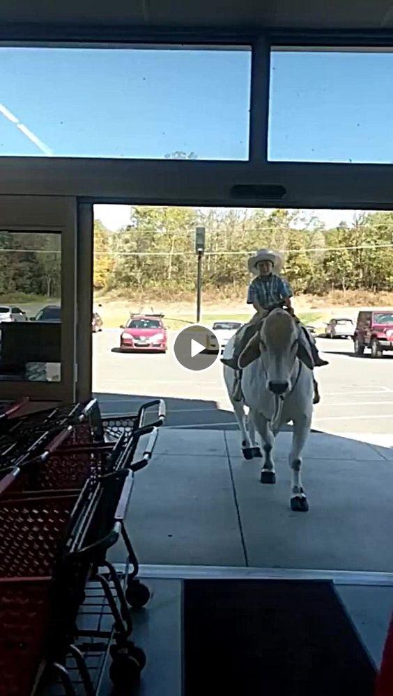 Garotinho Cowboy entrando com vaca no mercadinho.