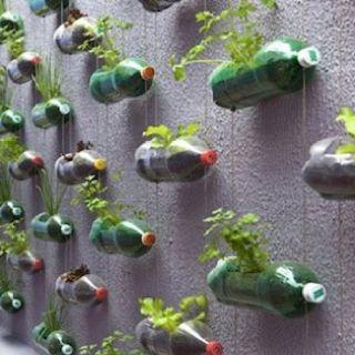 Recycle bottle garden.