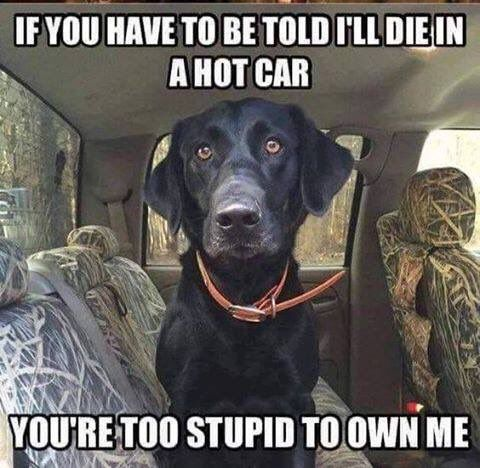 NEVER leave your dog in the car during warm or hot weather! The car will turn in to an oven and quickly kill them.