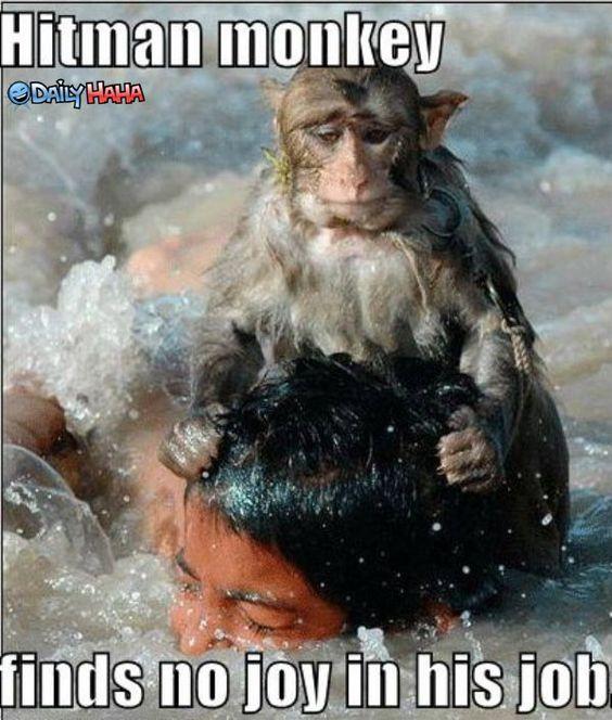 Humor-Funny-Pics: Funny monkey face Fashion cool photos