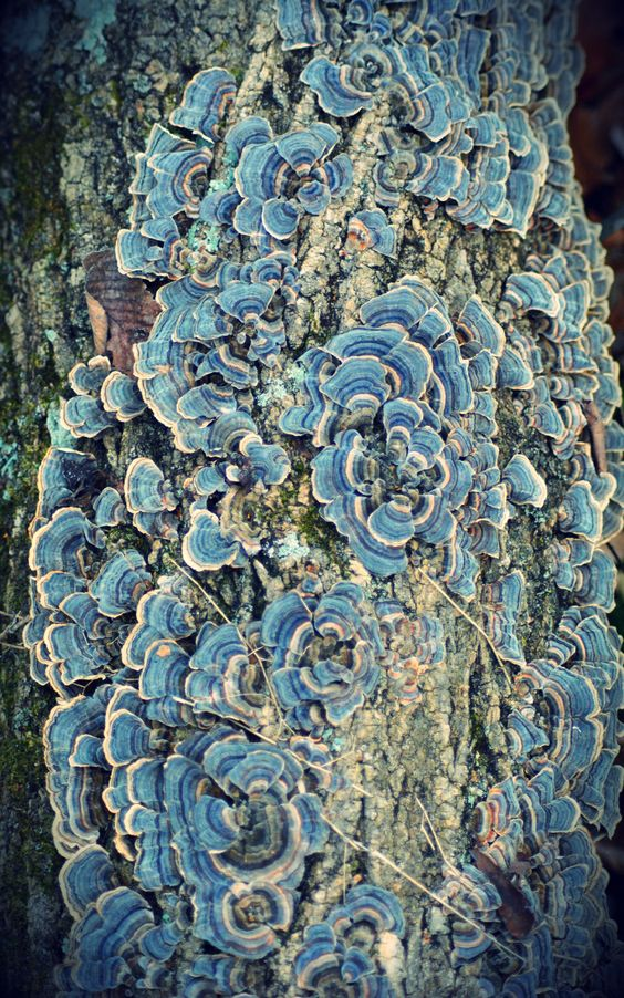 Fungi ~ Wow! Just Wow! After Turbo Charged Reading the code seems to come out of my head http://youtu.be/LyO3EkP1TdY
