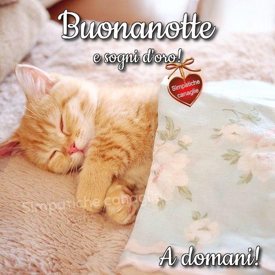 Buonanotte E Sogni D Oro Buonanotte Dolci Buonanotte E