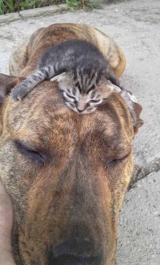 24 Little Cute Cats Make Your Life Happier Kissa