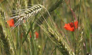 Cereales, tu fuente de energía