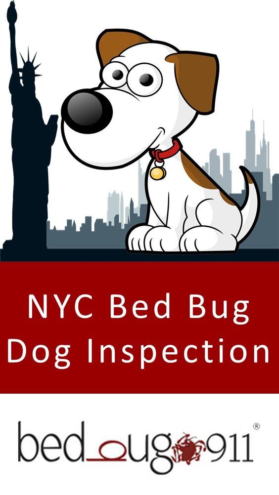 In NYC, bed bug dog inspection is your best bet for nipping a bed bug infestation in the bud. Such a highly populated city, teeming with highly trafficked businesses, and bustling multi-family buildings needs every edge that it can get to prevent a full blown bed bug infestation from occurring. The BedBug911 bed bug sniffing dogs are NYC's secret weapons against bed bug infestation.