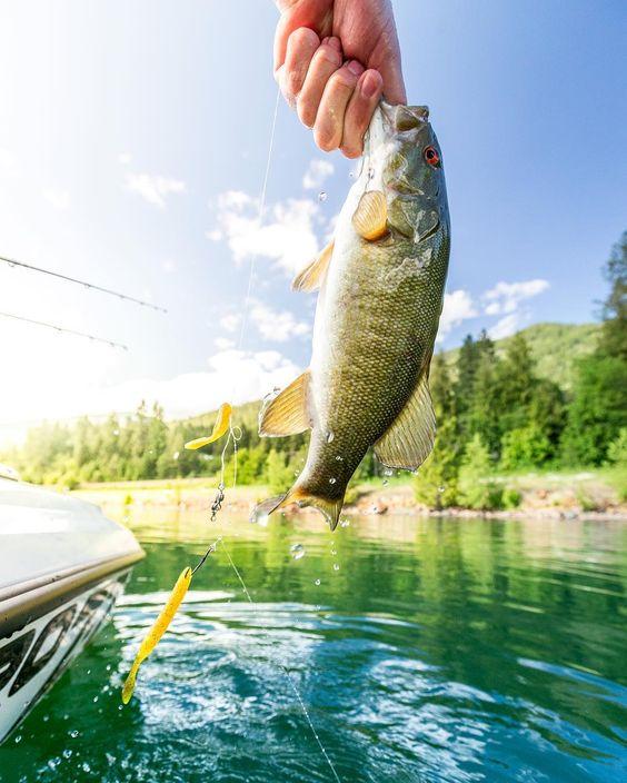Bass fishing lake fishing lake pend oreille washington for Bass fishing washington