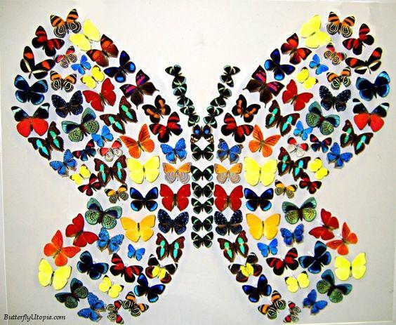 butterflies | borboletas