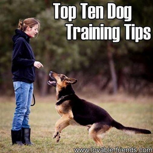 Dog Training Food Dog Training To Protect Dog Training Near Me