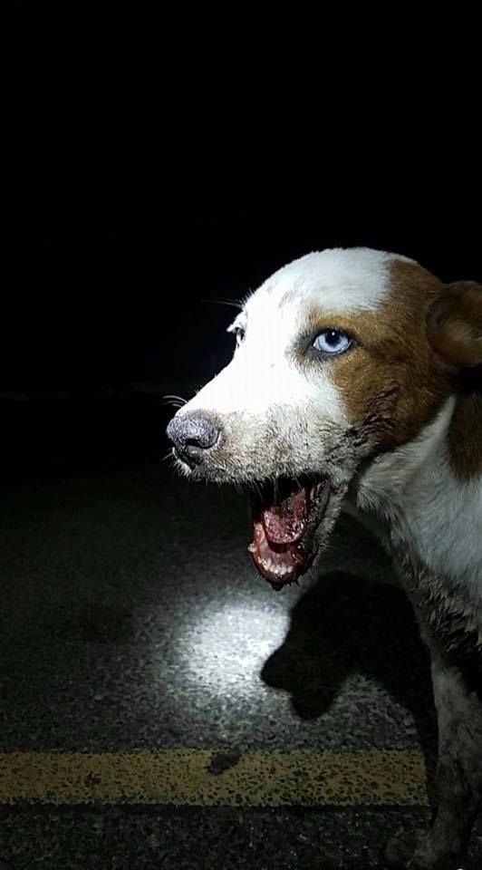 In The Middle Of The Night A Dog With A Broken Jaw Hovered Near A Parked Car In Mcallen Texas His Jaw Stuck Open And Bleeding P Dogs Animal Rescue Dog