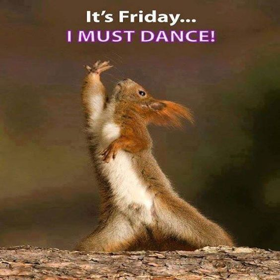 27 Work Memes Friday Squirrel Funny Dancing Animals Cute Animals