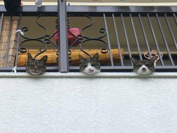 Balcony cats
