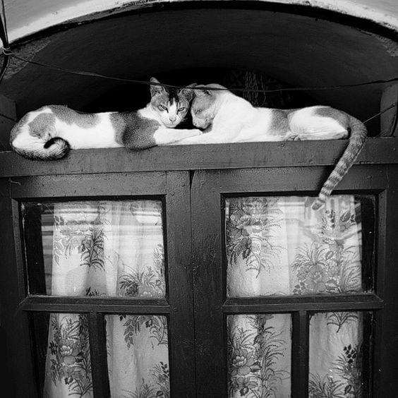 Abriendo Puertas y Ventanas... Door with cats