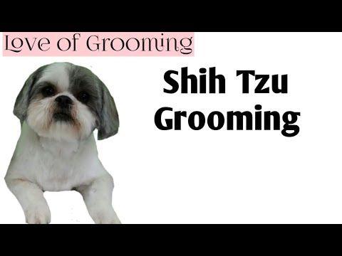 Shih Tzu Head Grooming Short Easy Maintenance Youtube Shih Tzu Shih Tzu Grooming Shih Tzu Funny