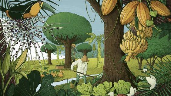 ilustração de uma agrofloresta