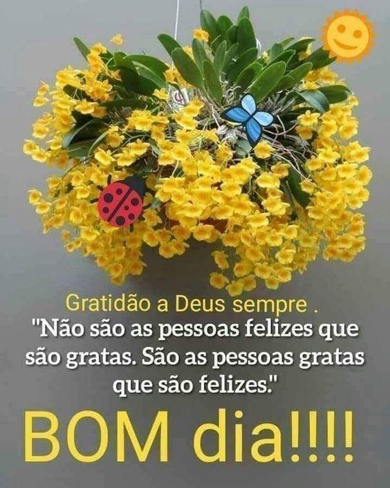 Seja grato seja feliz bom dia