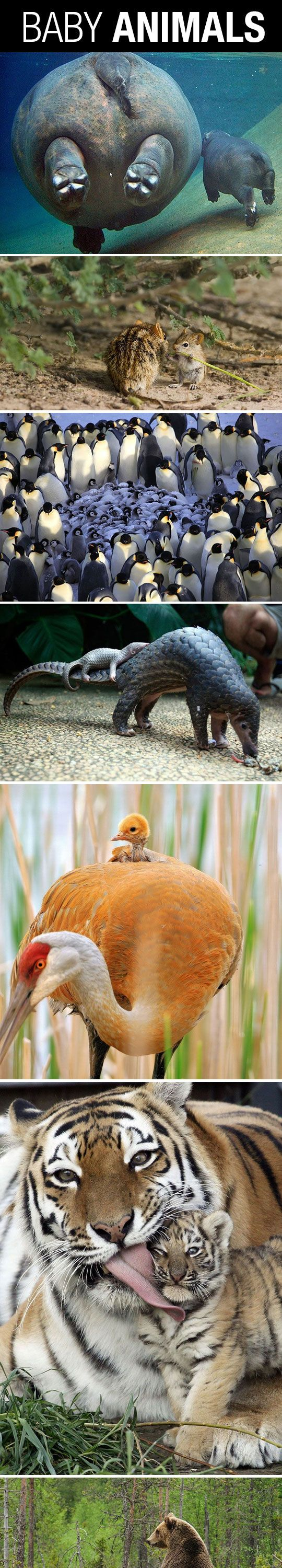 Just Baby Animals Being Adorable
