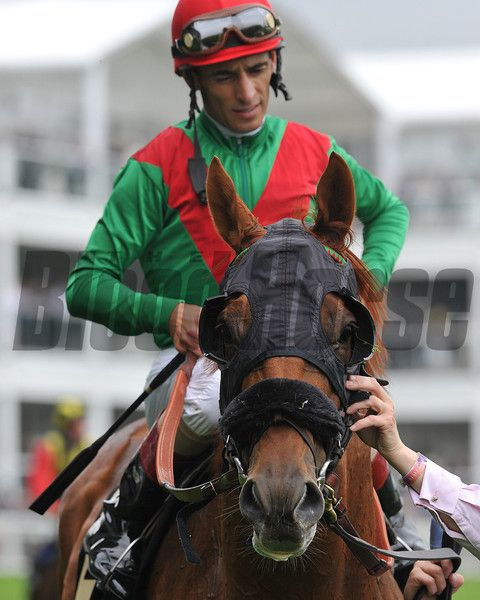 Animal Kingdom, John Velazquez up at Ascot after race, Royal Ascot; UK, photo by Mathea Kelley; 6/18/13