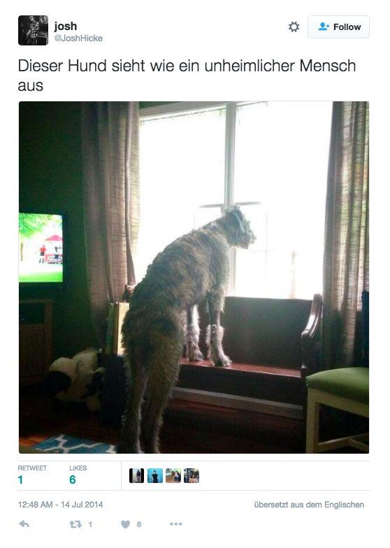 Nur 12 Hunde, die aussehen wie Menschen im Hundekostüm