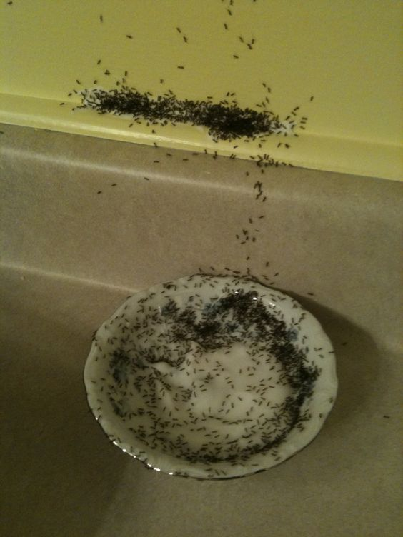 how to get rid of roaches fast with boric acid